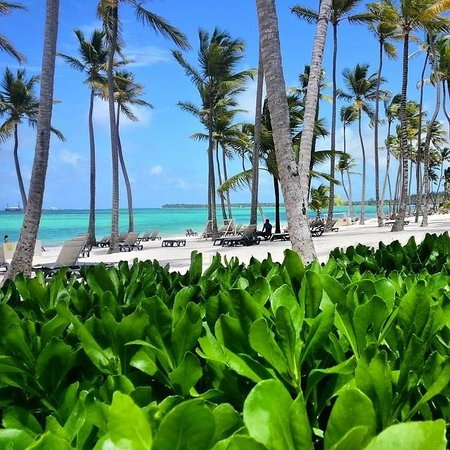 Barcelo Bavaro Beach - Adults Only: From Pool Area