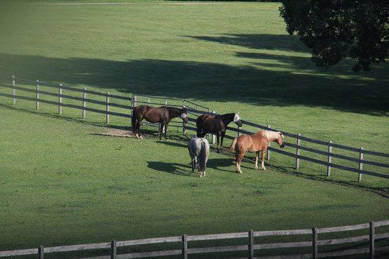 Old Stone Farm: The horses were a delight to watch