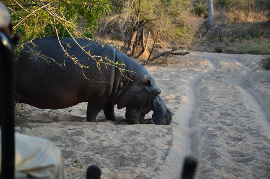 Londolozi Private Game Reserve: I like to eat sand!!
