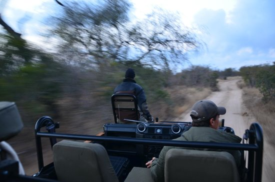 Londolozi Private Game Reserve: Hang oooon there Foster!