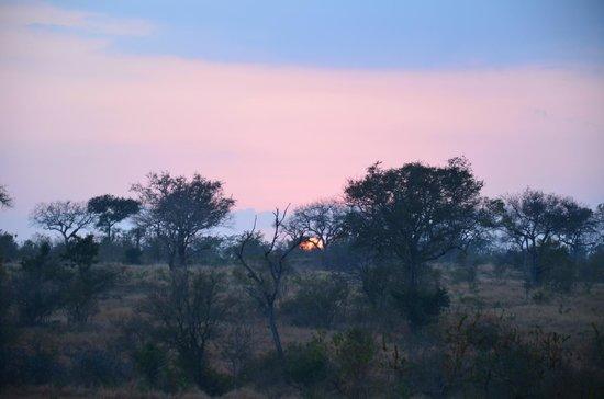 Londolozi Private Game Reserve: Sunrise in Sabi Sands Game reserve!