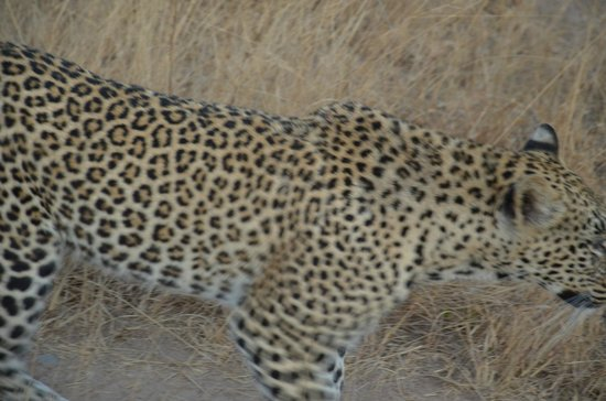 Londolozi Private Game Reserve: Can I touch you please?