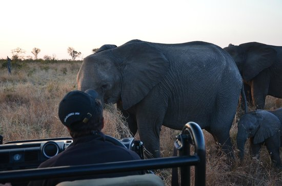 Londolozi Private Game Reserve : Can you get any closer...maybe sit in the front seat??