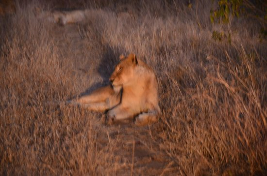Londolozi Private Game Reserve : Just sunning myself before sunset and dinner arrives....called takeaway!