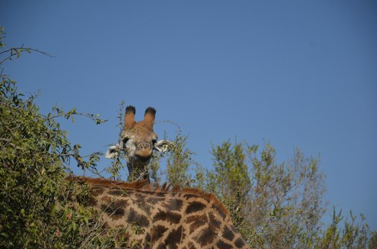 Londolozi Private Game Reserve : WHAT...are YOU looking at?