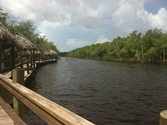 Jungle Erv's Everglades Airboat Tours : View along the boardwalk.