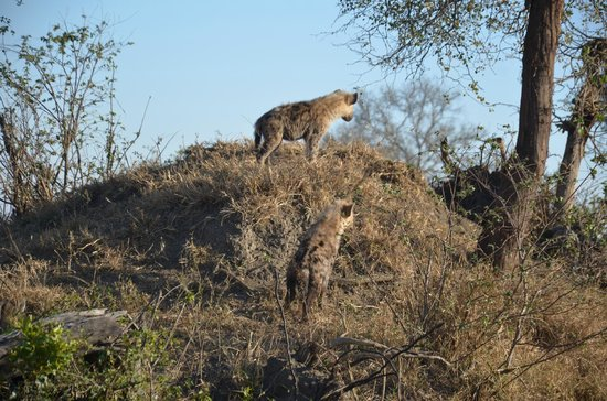 Londolozi Private Game Reserve : I'm on top of the castle...