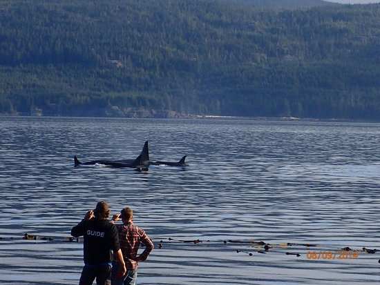 Wildcoast Adventures - Day Tours: The most incredible morning!  Clay and Bender filming the Orcas.