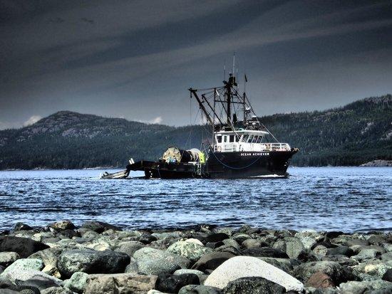 Wildcoast Adventures - Day Tours: Fisherman