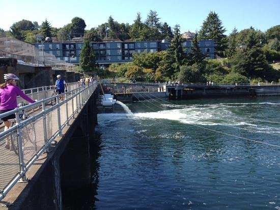 Hiram M. Chittenden Locks: Locks and Seattle sunshine
