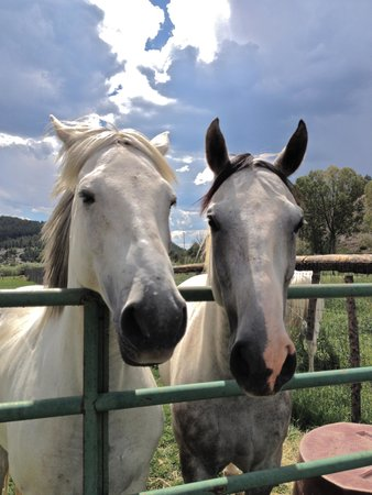 Fireside Inn & Cabins: Kids loved looking at the horses