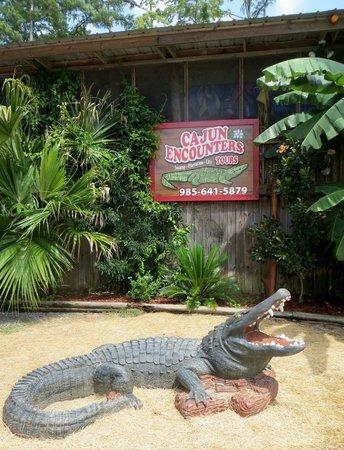 Cajun Encounters : This gator doesn't like marshmallows