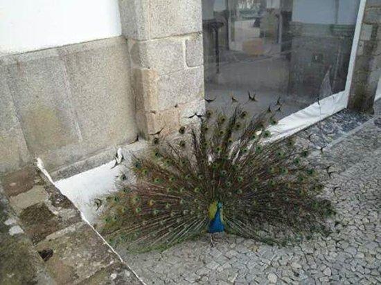 Ibis Evora: evora sgi2