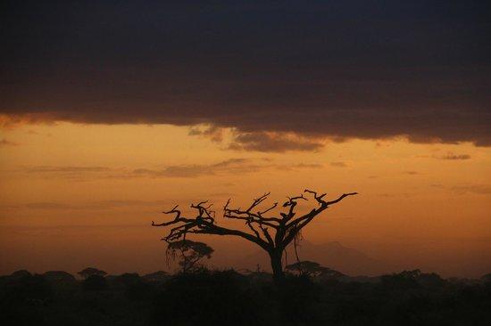 Explorer Kenya: Trees