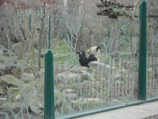 Tiergarten Schoenbrunn - Zoo Vienna: Unico!