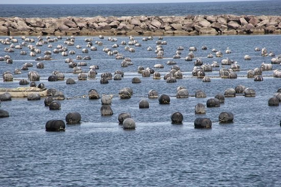Oregon Dunes National Recreation Area : An oyster farm produces shellfish for the local retail distributor