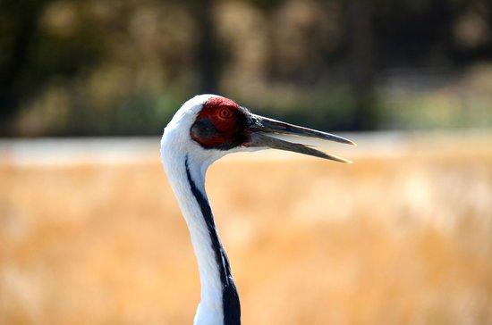Wildlife Safari: I think this was a crane of sort...beautiful!