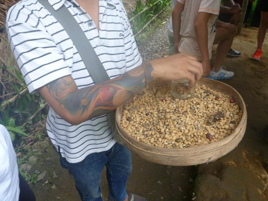 Bali Made Tour - Day Tours: Luwak coffee in it's purest form!