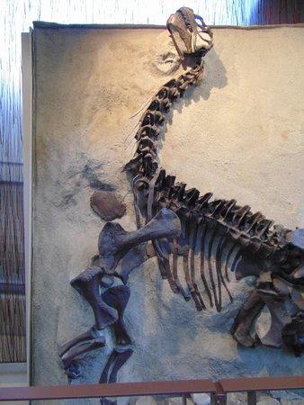 Dinosaur National Monument: detail
