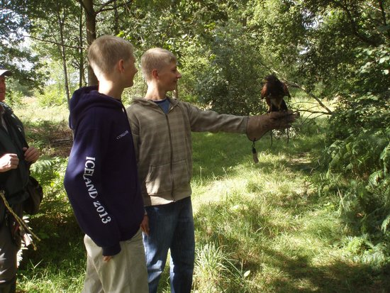 Battlefield Falconry Centre: What a wonderful experience