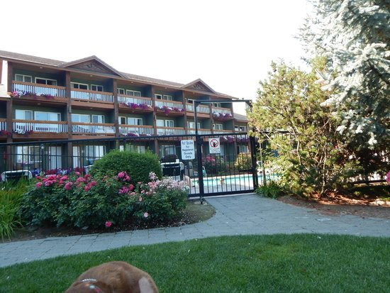 Lakeside Lodge and Suites : Outdoor Pool