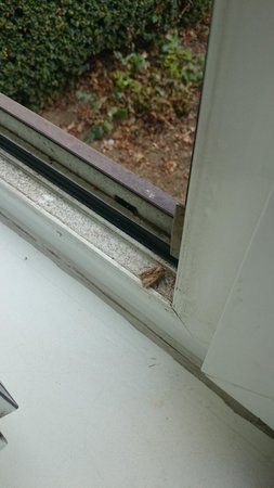 Novotel Brussels Airport : dead insects on the window pane
