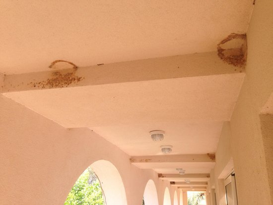 Filoxenia : Balconies remainings  of bird nests August 2014