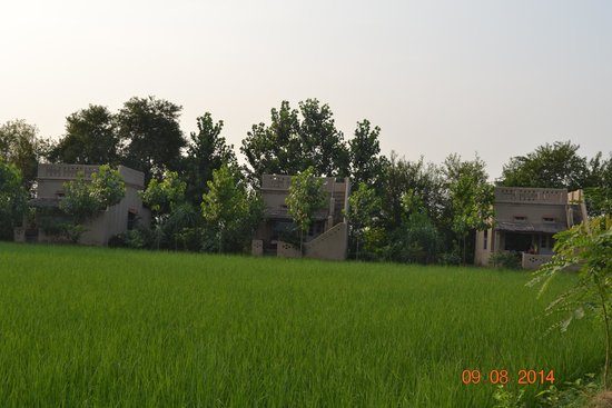 Punjabiyat: View of cottages from approach road.
