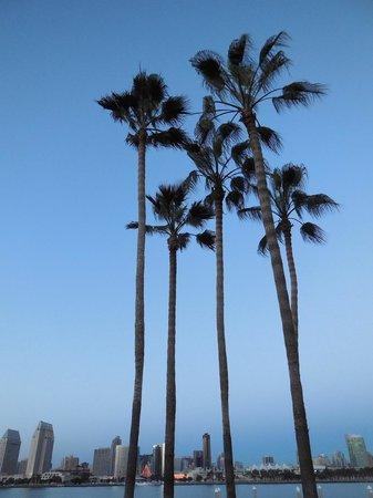 Coronado Island Marriott Resort & Spa : Vue sur San Diego depuis piscine