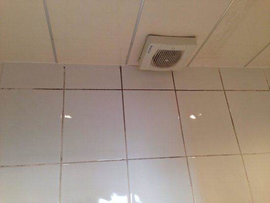 Minto Guest House: Mold on the walls!