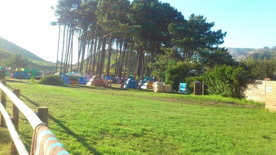 Camping Islas Cies: A que es una maravilla!!! entre pinos y eucaliptos...