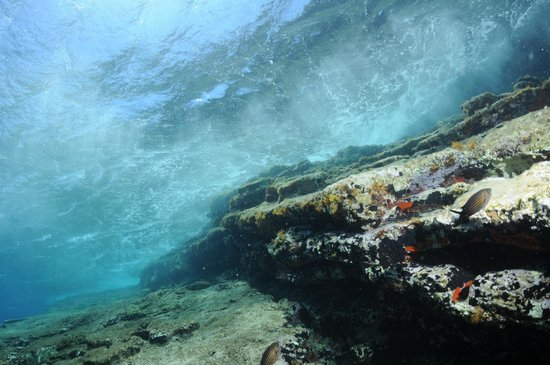Pelagos Dive Centre: 9