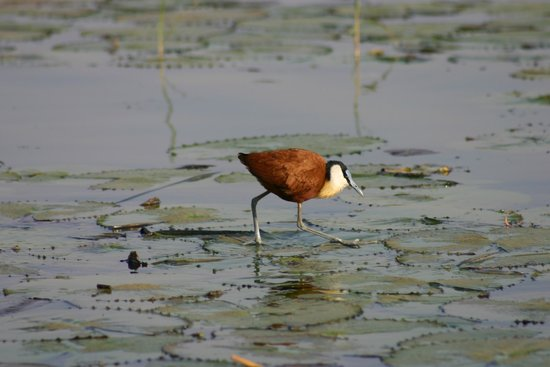 Mvubu River Lodge: Bird life
