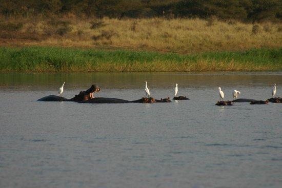 Mvubu River Lodge: The Hippos