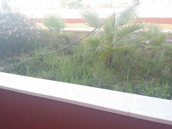 Occidental Isla Cristina : la jardinera atrae mosquitos
