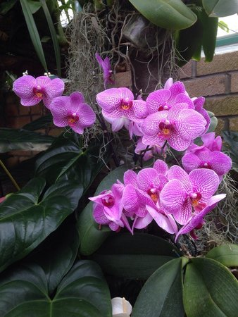 Eric Young Orchid Foundation: Orchid