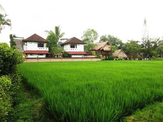Tegal Sari: Rice Field