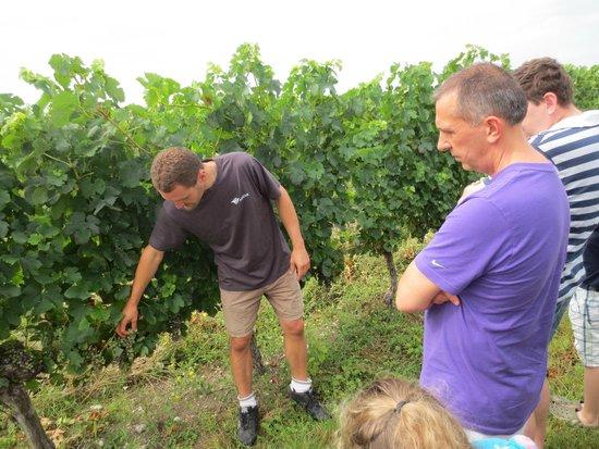 Bergerac Wine Tours: Christophe showing us the vines at Ch De Panisseau
