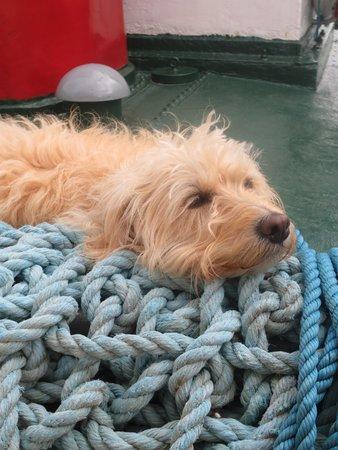 Loch Shiel Cruises: Jims dog
