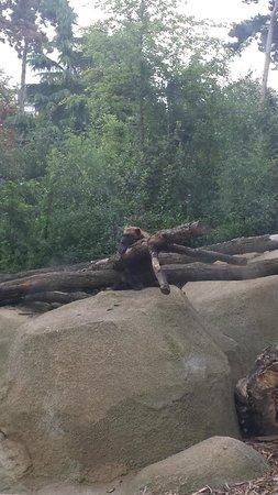 Parc Zoologique de Paris: Glouton