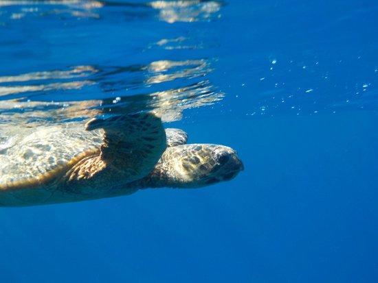 Port Ghalib Resort: Черепаха на домашнем рифе