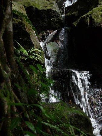 Blue Hawaii Photo Tours: waterfall closeup