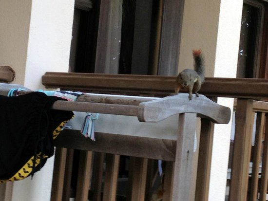 Laguna Redang Island Resort : You can see numerious squirrels on your balcony any time