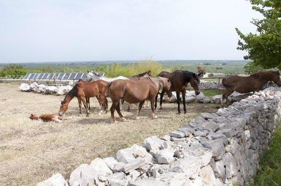 Lama di Luna - Biomasseria : Eine Herde von 14 Pferden gehört ebenfalls zum Bauernhof