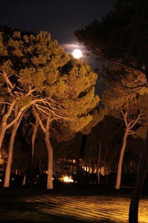 Hotel du Castellet: Cocktail sous la pleine lune