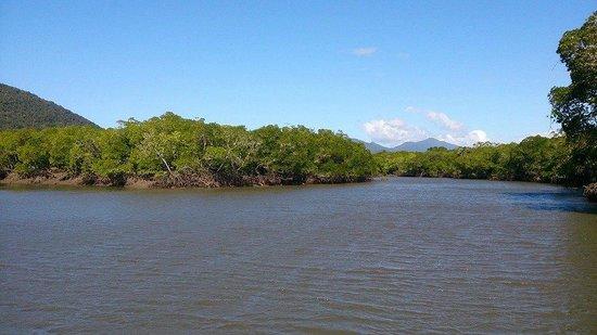 Cairns Harbour Cruises: Amazing Amazon like Inlet