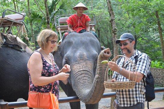 Siam Safari: feeding the elephant