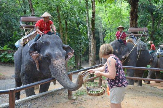 Siam Safari: feeding elephant