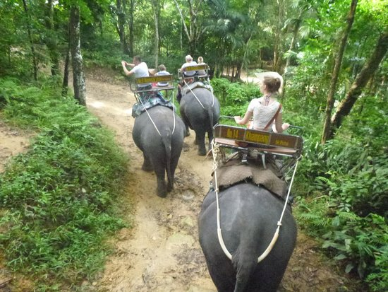 Siam Safari: elephant treking