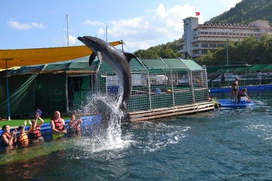 DolphinPark Marmaris: jump up high!